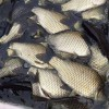 昆明鲤鱼批发渔场现货免费送货上门